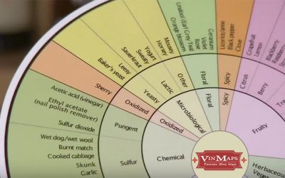 Enhance Your Wine Tasting Experience With The Wine Aroma Wheel