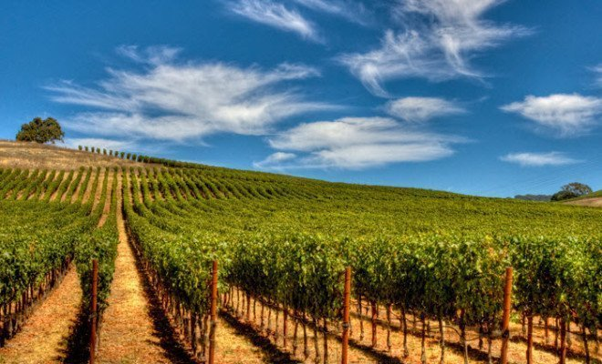 Fun things to do for Texas Wine Month 2019